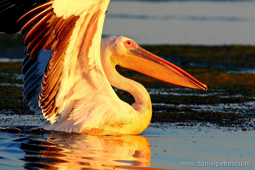Delta Dunarii - Fauna