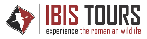 Excursii in Delta Dunarii cu IBIS TOURS
